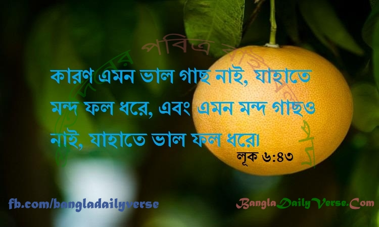 লূক ৬:৪৩
